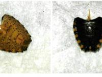 Hmyz s bodcem