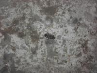 Co je to za hmyz