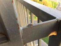 Smradlaví brouci na zdech paneláku