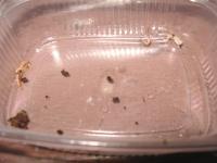 Identifikace škůdce