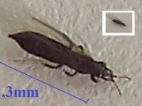 identifikace brouka/hmyzu