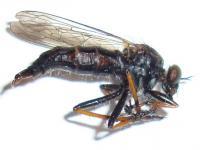 pomoc s identifikací hmyzu