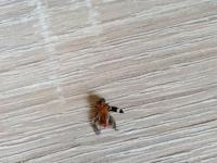 Aky je toto hmyz?