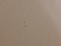 pomoc, 1-2 mm brouček v ložnici