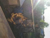 Malá vajíčka na síťce