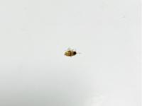 V kuchyni a koupelně hmyz